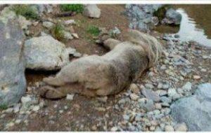 نجات جان خرس سرابی و بازگشت به زیستگاهش